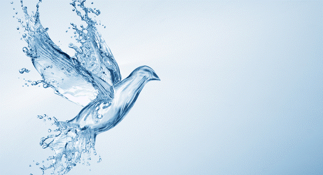 Dove and Water